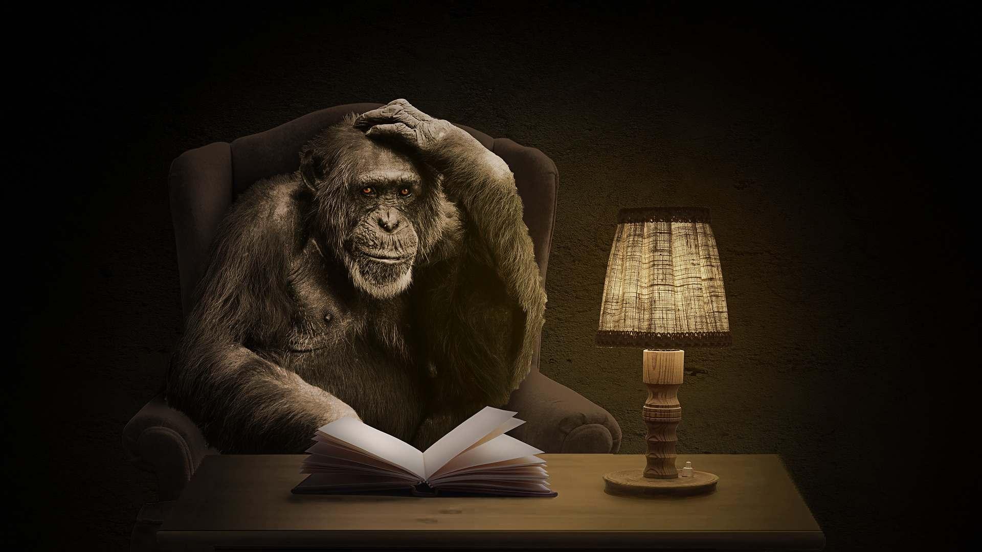 Małpa zksiążką
